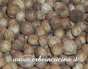 Erbe in cucina ricetta pakora al coriandolo for Seminare aglio