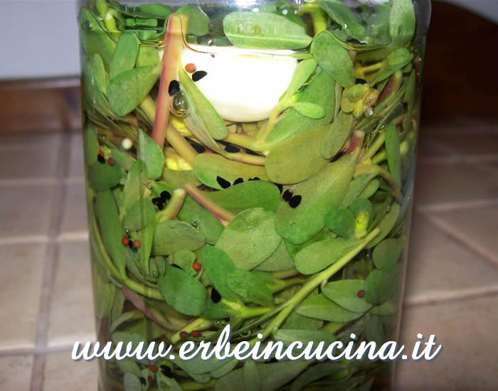Pickled green purslane