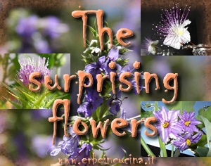 The surprising flowers
